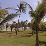 Barra dos Coqueiros.