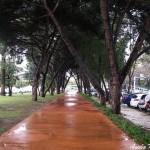 Ciclovia do Campo Grande